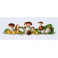 Mushroom Boom